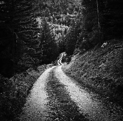 _DSC1132_01 (edesüket) Tags: forest alpen alps austria black white blackandwhite trip road dirtroad nature bnw nikon d610 europe eu hiking tree trees