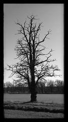 Caspar (Antiteilchen) Tags: wood holz land blackwhite schwarzweiss tree cdf caspardavidfriedrich baum germany deutschland berlin