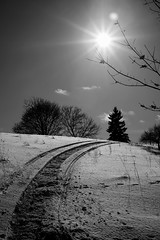 Biotar 2/58mm (Vladimir Gazoukin) Tags: canada country winter simcoe vladimirgazoukin sky trees barrie bw