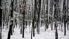 Winter time (jandewit2) Tags: winter bomen sneeuw bos sysselt