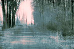 Walking In Tritone (Alfred Grupstra) Tags: tree nature forest landscape fog winter outdoors season woodland scenics mist backgrounds nonurbanscene weather morning ruralscene nopeople beautyinnature branch spring