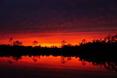 'Red sky at night, sailors delight...' (Jim Atkins Sr) Tags: sunset spectacularsunsetsandsunrises cloudsstormssunsetssunrises reflections creek redclouds fairfieldharbour northcarolina northwestcreek sony sonyphotographing sonya58 sky forest