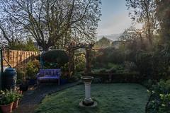 Frosty start (20190403) (Graham Dash) Tags: addlestone frost garden morning
