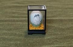 A minimalistic cat egg riding on a sea of green (alisonhalliday) Tags: smileonsaturday minimaleggtic egg stilllife canoneos77d canonefs18135mm cat