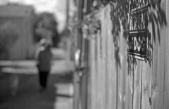 Beware! (PositiveAboutNegatives) Tags: leica slr leicaflexsl leitz leicaflex 50mm 50mmsummicron leicar orangefilter film analog bw blackandwhitefilm for fomapan fomapan100 rodinal coolscan girl dog bokeh lakeworth florida sign signagebeware