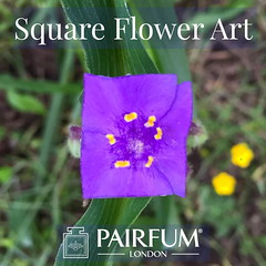 Square Leaf & Flower Art (PAIRFUM) Tags: artisan artisanperfumersoflondon authentic beautiful blogger boutique candle christmas diffuser gift giftideas holidaydecor indie interiordesign london londonfashion love natural niche organic original pairfum parfum peace perfume real shoppingonline unique vegan