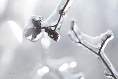 Helios 44-2_0375_escarpement glacé_DSF1619 (J-P Rioux) Tags: helios442 jprioux fujifilm fuji hiver winter glace ice escarpement