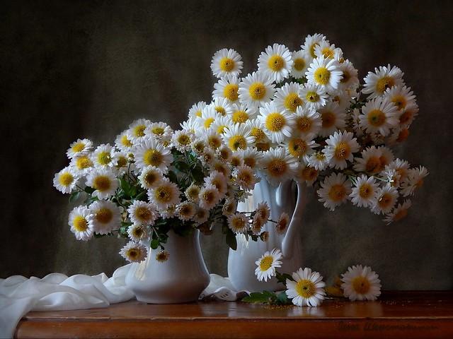Обои цветы, ромашки, букет, ваза картинки на рабочий стол, раздел цветы - скачать