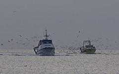 Retour des pêcheurs au Grau du Roi - IMBF6386 (6franc6) Tags: grauduroi occitanie languedoc gard 30 janvier 2019 6franc6