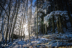 Winter (Lake District, UK) (Renate van den Boom) Tags: 01januari 2019 bos europa grootbrittannië jaar lakedistrict landschap maand natuur renatevandenboom seizoenen winter