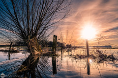 flooded (bjdewagenaar) Tags: photography photograph photographer photooftheday sony sonyalpha sonyphotographer sonyimages sonya sonya7riii sonygm sonygmaster landscape landscapephotography water waterscape reflection sun sky nature fullframe mirrorless tree dutch holland raw lightroom wideangle 1635mm