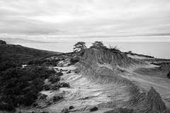 Broken Hill - Torrey Pines, California (MbopPhotos) Tags: torrey pines pine tree bw black white long exposure california ocean beach broken hill trees san diego la jolla