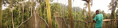 Canopy walkway, Kakum National Park, Ghana (inyathi) Tags: westafrica ghana canopywalkways rainforests forests kakumnationalpark rainforest africa