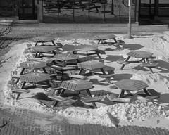 Picnic time (Howard Sandler (film photos)) Tags: film blackandwhite acros voigtlander vitomatic skopar