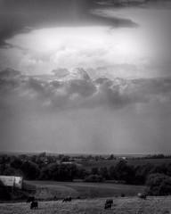 Storm Coming / Les nuées d'orage (H - - J) Tags: blackandwhite monochrome monotone noiretblanc sky ciel nuages clouds storm orage cow vache farm ferme barn grange fields champs