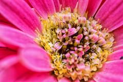 (charly84_jq) Tags: nikon nikond3200 nikonistas nikonista nikonargentina nikon3200 argentina arg naturaleza nature flor flower macro macrofotografia macrofotgrafia macrophoto macrophotography