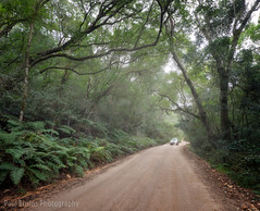 Knysna Forest Road (Panorama Paul) Tags: paulbruinsphotography wwwpaulbruinscoza southafrica southerncape gardenroute knysnaforest indigenousforests road car nikond800 nikkorlenses nikfilters vertorama