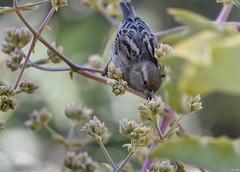 Nature! (Nina_Ali) Tags: bird nature flora morocco naturescomposition