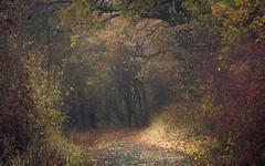 Autumnal Welcome in the Eifel (Netsrak) Tags: baum eifel europa europe forst herbst landschaft natur nebel rheinland rhineland wald autumn fall fog forest landscape mist nature tree trees woods