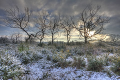 Winter on the edge of Epping Forest (ArtGordon1) Tags: hollowpond hollowponds leytonflats deadtrees london england uk winter january 2019 davegordon davidgordon daveartgordon davidagordon daveagordon artgordon1 trees