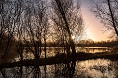 Through the trees. (Pete Cartwright) Tags: watermead nikon d7200 sigma 1020mm f35 water lakes sun leicestershire