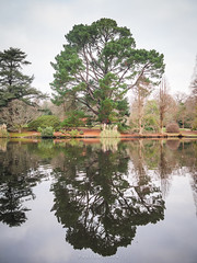 Sheffield Park Reflection (amipal) Tags: 2019 england gb greatbritain nationaltrust sheffieldpark sussex uk unitedkingdom