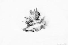 Arnos Vale Cemetery in the snow (zolaczakl) Tags: bristol bristolinmonochrome bw blackandwhite blackandwhitebristol mono monochrome graveyard grave urn flowers snow 2019 february nikond800 nikonafsnikkor50mmf18glens photographybyjeremyfennell jeremyfennellphotography uk england