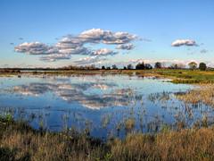 Wetlands Beauty (randyherring) Tags: ca california centralcaliforniavalley cosumnesriverpreserve elkgrove afternoon aquaticbird nature outdoor recreational waterfowl wetlands