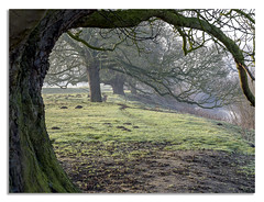 Morning walk. (johnhjic) Tags: johnhjic northyorkshire trees winter spring river bank mist branch mud mole hill branches morning walk colour colours color colors green brown framed arched arch