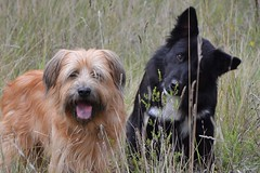 Echange de garde de chiens Filou et Tango (animal-futé) Tags: garde chiens animal échange gratuit