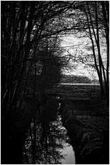 Drenthe (Schnarp) Tags: drenthe provinciedrenthe westervelde norg natuur nature natur platteland country zwartwit bw hdr pentaxk10d nederland niederlande netherlands holland paysbas europa europe