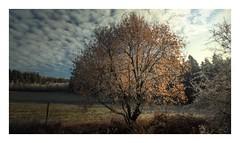 Ein Winter im Rahmen (linke64) Tags: thüringen deutschland germany natur landschaft winter rahmen himmel wolken wald bäume baum wiese winterwald wolkenhimmel