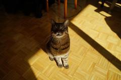 DSC01080 (iocatco) Tags: cat kitten cats sony a7
