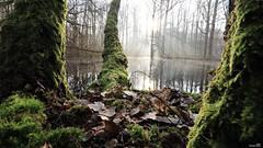 La lumière des ombres (Un jour en France) Tags: arbre lumière ombre reflet nature forêt bois tree rivière contrejour soleil sun feuille hiver