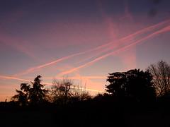 DSCN8400. (jeanchristophelenglet) Tags: cergyfrance leverdesoleilaube sunrisesunup nascerdosolalvorada arbre tree arvore hiver winter inverno bleu blue azul rose pink rosa rouge red vermelha
