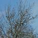 Fourteen Magpies:     358/365