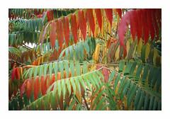 Autumn Palette - Fuji Provia 400X (magnus.joensson) Tags: sweden swedish skåne svaneholm autumn color october 35mm nikon l35af compact e6 24x36 agphotolab