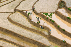 _J5K0877.0617.Lao Chải.Mù Cang Chải.Yên Bái (hoanglongphoto) Tags: asia asian vietnam northvietnam northernvietnam northwestvietnam landscape scenery vietnamlandscape vietnamscenery landscapeandpeople terraces terracedfields terracedfieldsinmucangchai transplantingseason sowingseeds people canon canoneos1dsmarkiii canonef70200mmf28lisiiusm tâybắc yênbái mùcangchải laochải phongcảnh ruộngbậcthang mùcangchảimùacấy mùcangchảimùađổnước người phongcảnhcóngười ruộngbậcthangmùcangchải