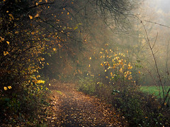 Autumn Stars (Netsrak) Tags: baum eifel europa europe forst herbst landschaft natur nebel rheinland rhineland wald autumn fall fog forest landscape mist nature tree trees woods bäume