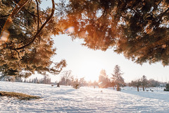 Vancouver-Winter-Walks-29 (_futurelandscapes_) Tags: vancouver winter snow cold february mountainview cemetery trees arboretum sunset evening graves sunny blue white vintage