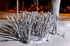 snow fingers (kirill3.14) Tags: night snowfall blizzard winter bushes trees outdoor snowflakes branches streets snow