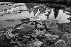Terraces (chrislon28) Tags: landscape yellowstone nationalpark film canon canonfilm 35mm kodak plusx terrace tavertine hotspring geology refleftion blackandwhite yellowstonenationalpark ftb fd