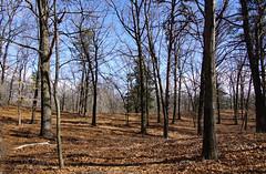DSC00444 (dr.tspencer) Tags: albanypinebush albanypinebushpreserve trees albanycounty landscape tamron16300mm