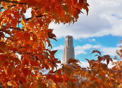 Fall Framed Cathedral (Hi-Fi Fotos) Tags: pitt cathedral campus building skyscraper universityofpittsburgh pittsburgh cathedraloflearning cathy fall autumn leaves color season city urban tree sky clouds nikon d7200 dx hififotos hallewell h2p