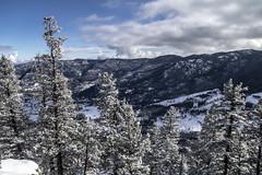 Snowy Trees (noname_clark) Tags: rockymountainnationalpark outdoor hike snow lillymountain tree mountain