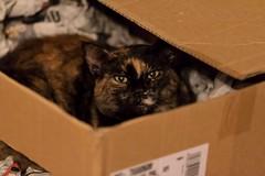 IMG_0759 Lola, Mallorca (Fernando Sa Rapita) Tags: canon canoneos eos1300d animal cat gatito gato kitten mascota pet lola