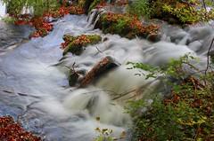 White water (sfryers) Tags: plitvicelakes plitvičkajezera nationalpark forest trees autumn leaves waterfall water unesco worldheritagesite croatia hrvatska smc pentaxfa 35mm 12