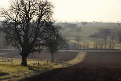 Arbres d'hiver... (Excalibur67) Tags: nikon d750 sigma globalvision art 24105f4dgoshsma paysage landscape arbres trees brume mist campagne