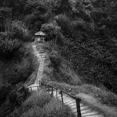 Hut, Bolaven plateau, Laos (pas le matin) Tags: hut hutte caban cabin asia asie travel stairs voyage world landscape paysage forest forêt trees arbres path chemin canon 7d canon7d canoneos7d eos7d laos lao bolaven bolavenplateau bw nb blackandwhite noiretblanc monochrome