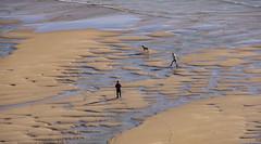 Cornwall, United Kingdom (tomst.photography) Tags: cornwall unitedkingdom greatbritain britain brits beach ocean sea dog dogwalkonthebeach dogwalk nature beachwalks walk hiking atlantic atlantik seaside oceanside water sand tomst